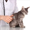 Ветеринарные клиники в Чебаркуле